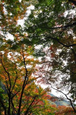 3白滝11.11.27