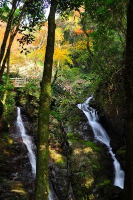 4白滝11.11.27