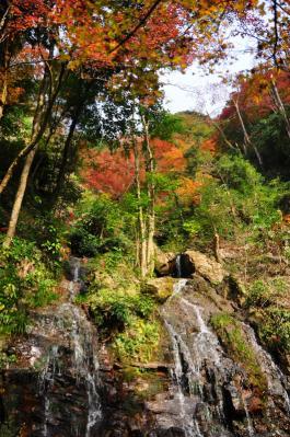 5白滝11.11.27