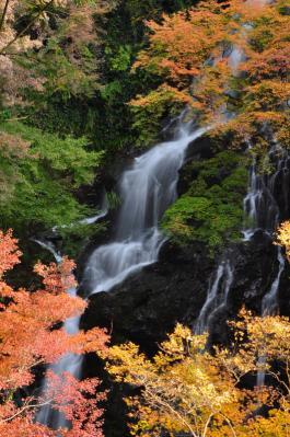 8白滝11.11.27