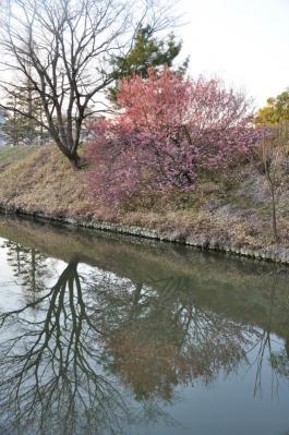 9道後公園12.03.14