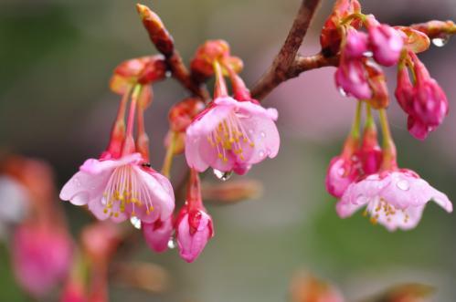 2三島神社12.03.17