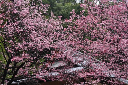 3三島神社12.03.17