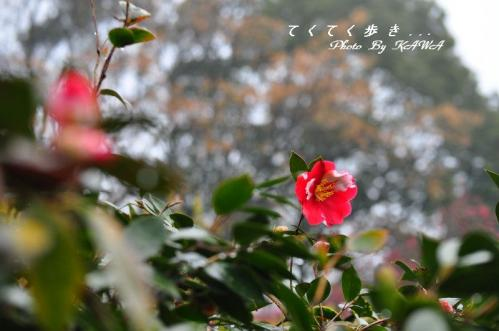 8緑化12.03.18