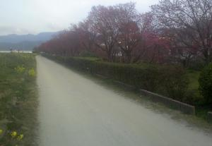 4赤坂泉12.03.30