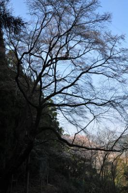 9源太桜12.04.08