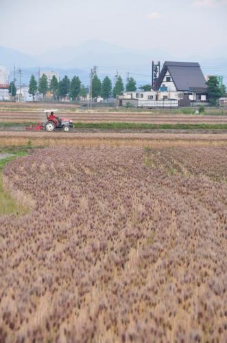 2麦畑12.05.12