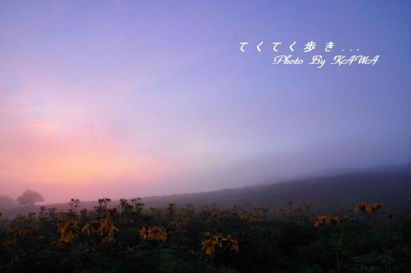 1ハンカイソウ12.07.24