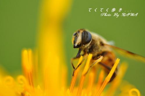 竜神平1 20120722