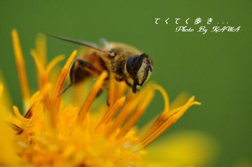 竜神平ハチ12.07.22