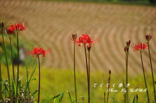 7日浦12.09.20
