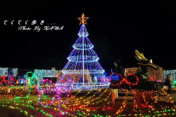 7まんのう公園12.12.27
