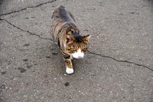 4猫13.01.13