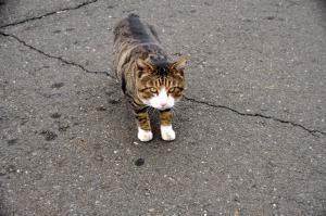5猫13.01.13