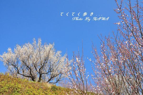 5旅行村13.03.05