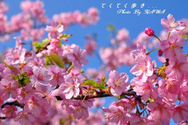 6糸山13.03.11