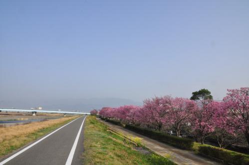 7赤坂泉陽光2013
