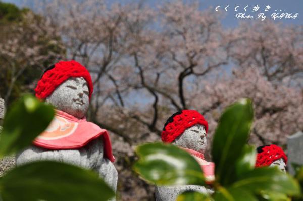 6金龍桜13.03.19