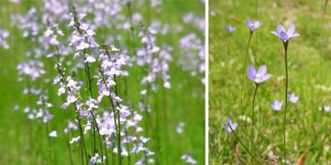 0522野花