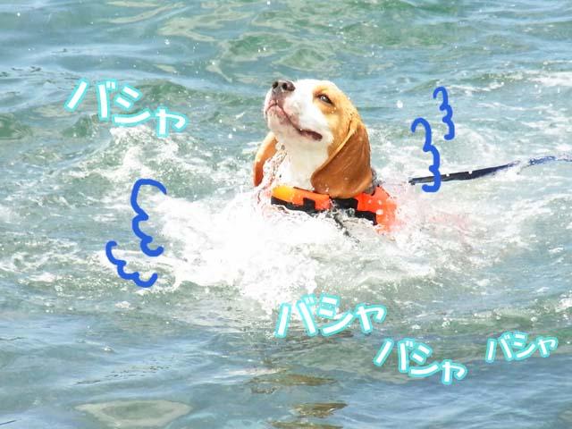 0725モク泳ぎ