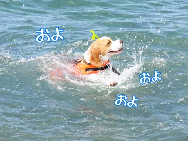 0725モク泳ぎ2