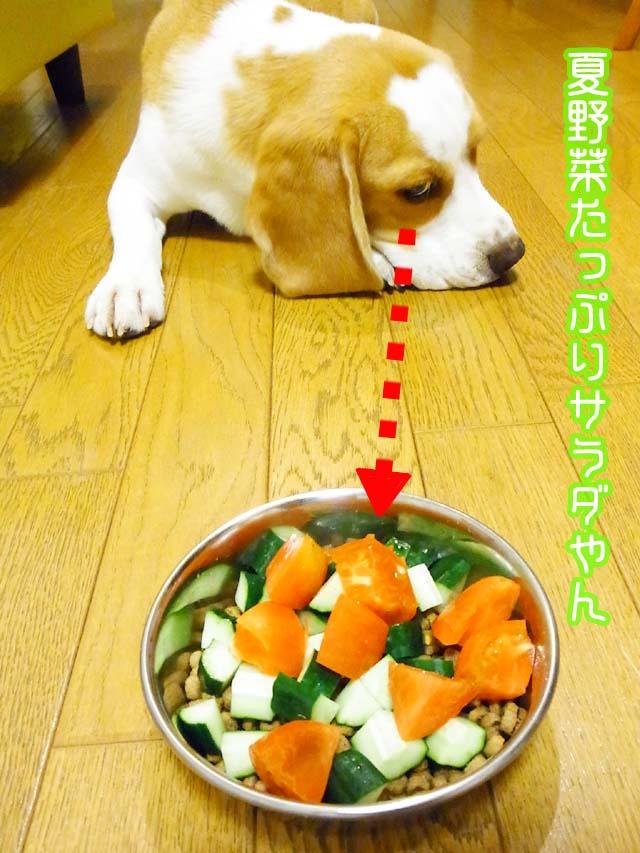 0808夏野菜