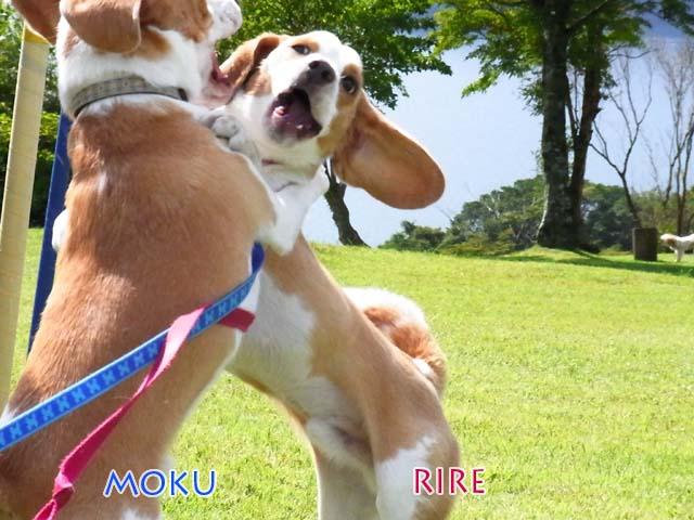 20101004MOKURIRE1.jpg