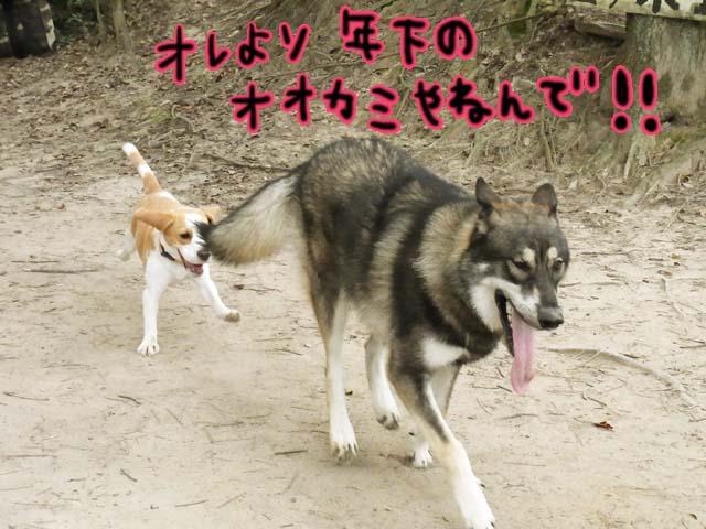 1025オオカミさん