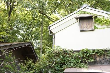 秋篠の森6