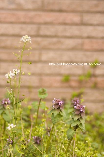 庭のお花1