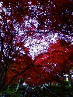 11/26 大山寺の紅葉