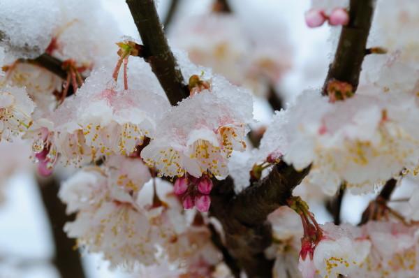 3月の雪2 015