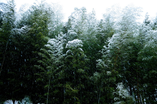 阿東町雪景色 027
