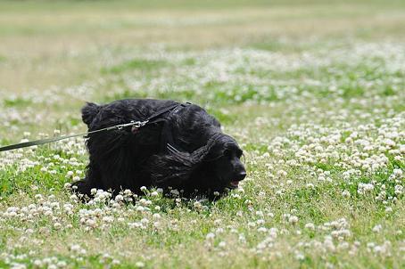シロツメ草と雪