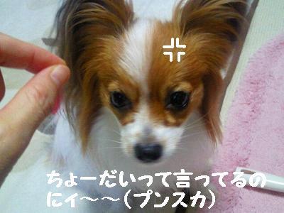 2011092307460001.jpg