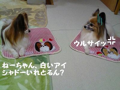 2012032901300001.jpg