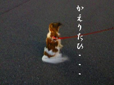 2012041918450000.jpg