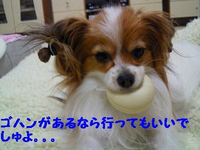 2012121322220001.jpg