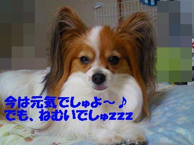 2012123013250000.jpg