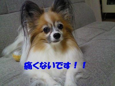 2012123013250001.jpg