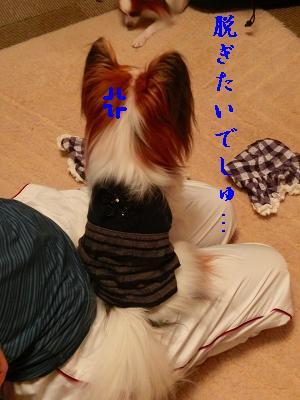 CIMG0217_20121119060504.jpg