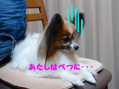 DSC07838_20110815035317.jpg