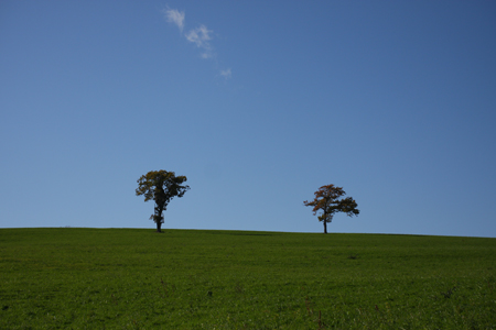 点在する木