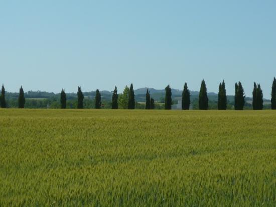 estate in Toscana1