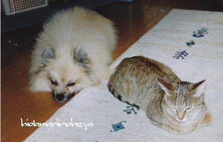 ロッキー&モカ1105296