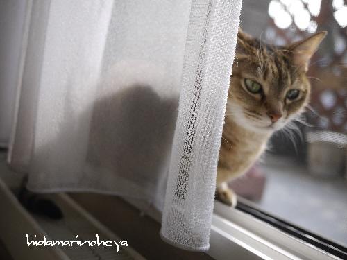 窓辺のモカ1106093