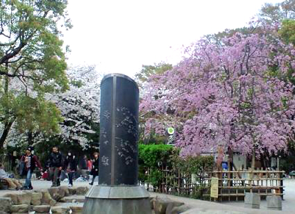 桜満開シーズン