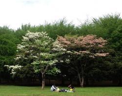 代々木公園の木々