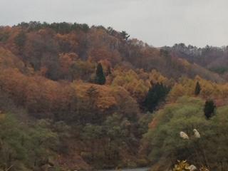 西和賀町の紅葉
