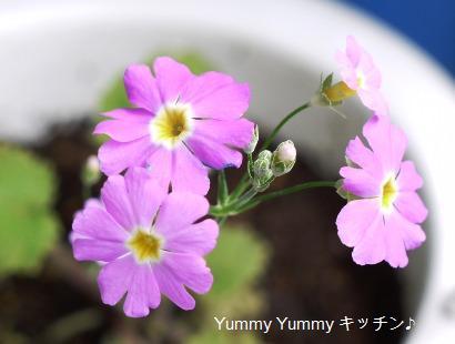 ベランダで咲いている花2